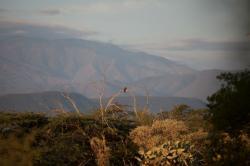 Isla Cabritos, République Dominicaine