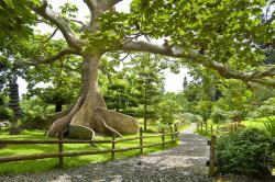Botanic Garden, Santo Domingo