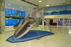 National Museum of Natural History, Dominican Republic