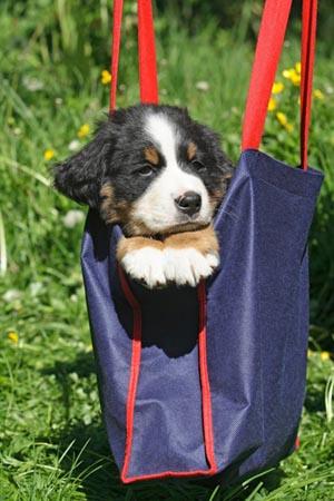 Viajar con mascotas a República Dominicana